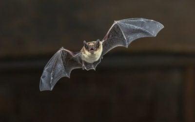 Reclaimed Wood Bat Boxes