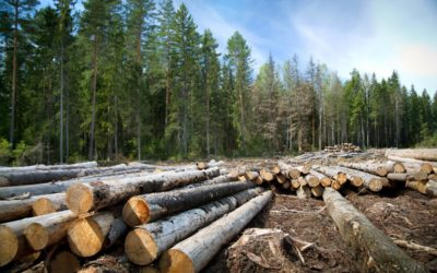 Reclaimed Wood Could Save Forests