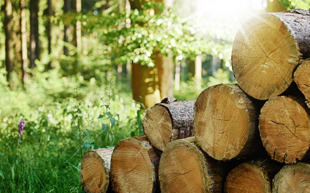 Reducing Your Ecological Footprint with Reclaimed Wood